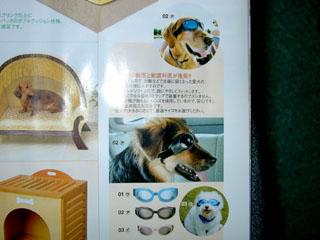 hundebriller